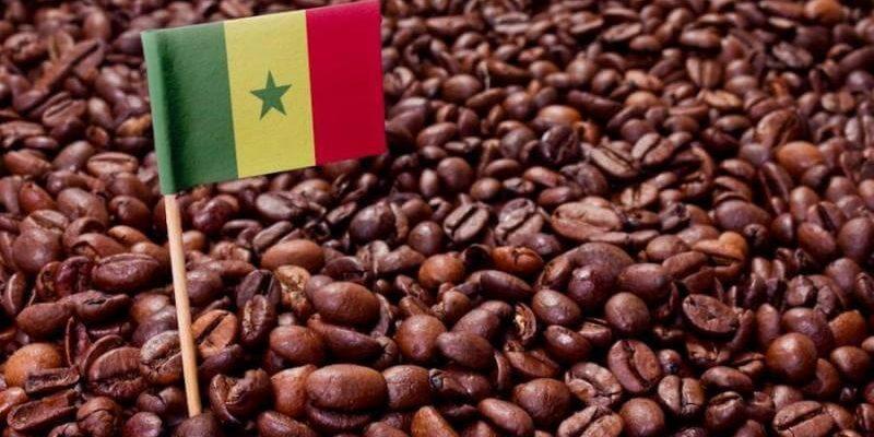 Le café du Cameroun