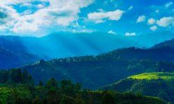 Café colombien qui pousse en altitude